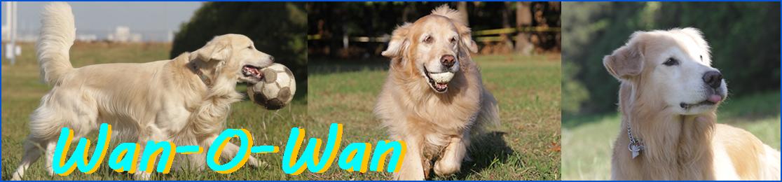 ドッグフードとサプリメント【Wan-O-Wan】