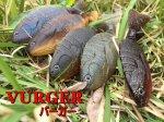 ドランクレイジー VURGER / バーガー