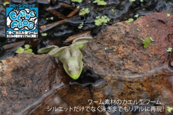 ジャッカル  Clone Frog クローンフロッグ