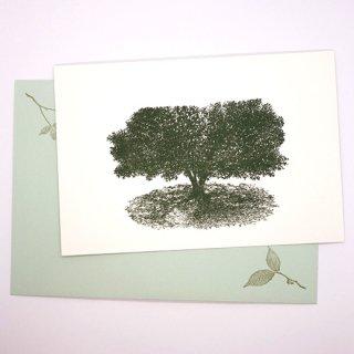 ポストカードと封筒のセット 木A(knoten)