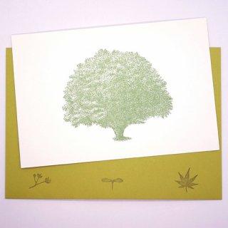 ポストカードと封筒のセット 木B(knoten)