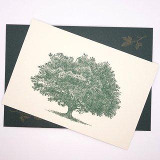 ポストカードと封筒のセット 木C(knoten)