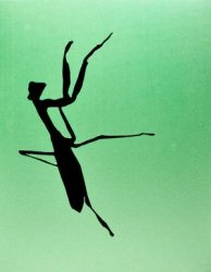 <B>Mantis (Special Edition)</B><BR>Daido Moriyama | 森山大道