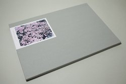 <B>SAKURA</B> <BR>鈴木理策 | Risaku Suzuki