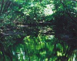 <B>Water Mirror</B> <BR>鈴木理策 | Risaku Suzuki