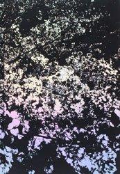 <B>Ango 日本語版 (signed)</B> <br>森山大道 | Daido Moriyama