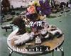 Nobuyoshi Araki: Rakuen (荒木経惟:楽園)