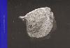 Harold Strak: Arthropoda (SIGNED)