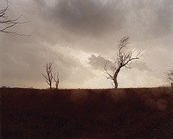 Todd Hido: One Picture Book #59: Cracked Trees