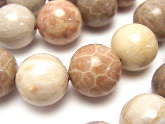 天然石卸 フォシルコーラル(化石珊瑚) ラウンド18mm 半連/1連(約36cm)