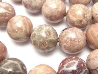 天然石卸 フォシルコーラル(化石珊瑚) ラウンド16mm 半連/1連(約36cm)