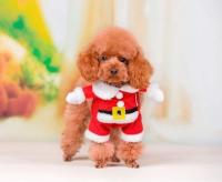 【サンタクロースコスプレ】クリスマス コスチューム 帽子付き