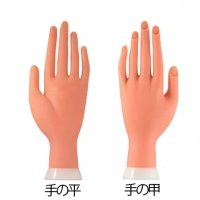 【アーム無し】ネイル練習用  ハンドマネキン 左手【ソフトタイプ ネイルチップ】検定練習