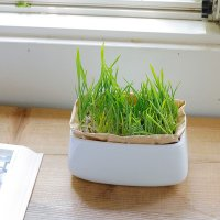 猫草栽培キット