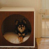 犬小屋(ホワイト×ウォールナット前面)
