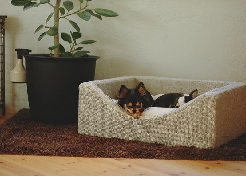 おしゃれな犬用ベッド|カドラー Nap - Soft type -