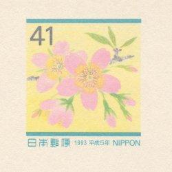さくらめーる 1993年ソメイヨシノ2種