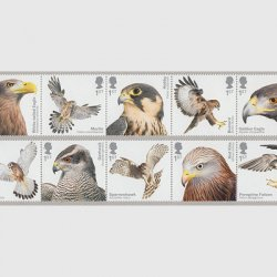 イギリス 2019年猛禽類10種