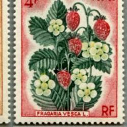 サンピエール・ミクロン 1970年ベリー4種