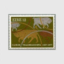 アイルランド 1977年頭の牛