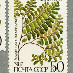 ソ連 1987年シダ植物5種