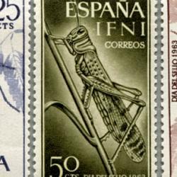 イフニ 1964年甲虫3種