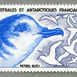 仏領南方南極地方 1989年アオミズナギドリ