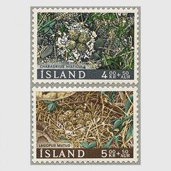 アイスランド 1667年巣の中の卵2種
