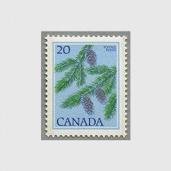 カナダ 1977年ベイマツ