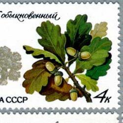 ロシア 1980年樹木5種