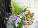 季節の花の寄植え1、北海道、中国、四国、九州以外は送料無料