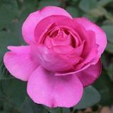 こだわって選んだばらの花束イブピアッチェ、ラ・カンパネラ、オートクチュール10本から