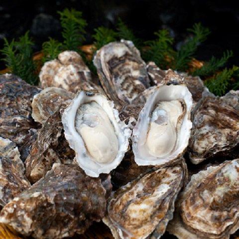 厚岸産本養殖牡蠣マルえもん 3Lサイズ10個