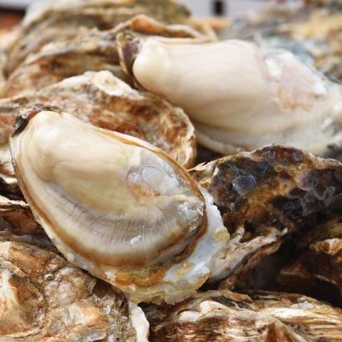 【マルえもん M】厚岸産本養殖牡蠣マルえもん(M×10個)