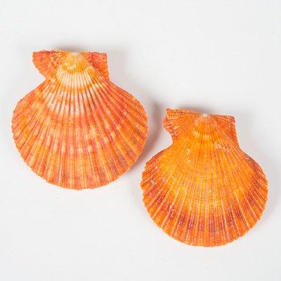 ホタテの仲間 オレンジ 2個セット