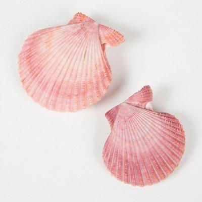 ホタテの仲間 ピンク 2個セット