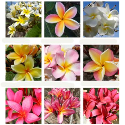 ハワイのお花ギフト8,000円