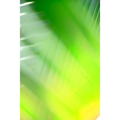 【土屋 高弘/Takahiro Tsuchiya Ta Film】#29 palm green