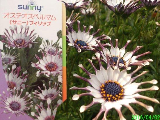 【楽天市場】珍しい 花 の 種の通販